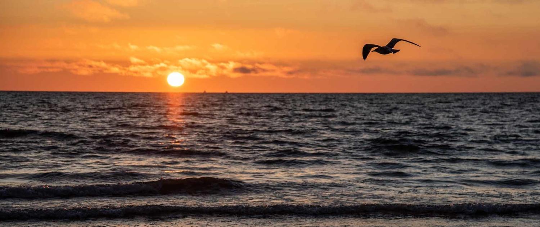 Möwe im Sonnenaufgang Insel Usedom